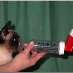 Aplicateur AéroKat pour chat asthmatique - asthme chat - santé du chat