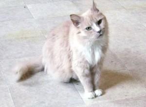 connaitre son chat - santé du chat - Santé Chat
