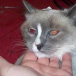 anesthésie - santé du chat - santé chat